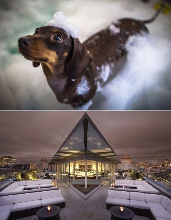 Luxushotel ME London verwöhnt Hunde mit Anspruch