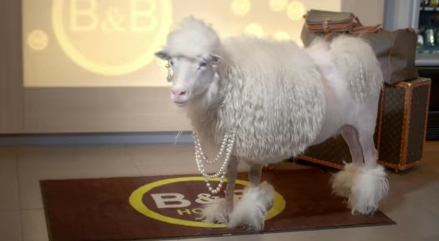 B&B Hotels werben mit Schafen